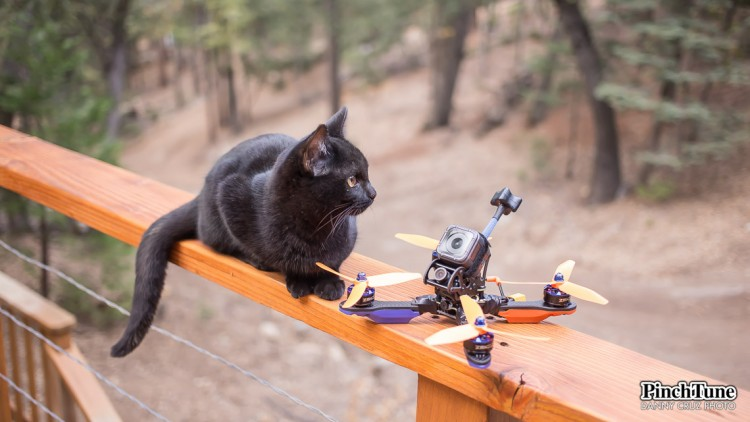 Racing Drone and Black Cat - PinchTune